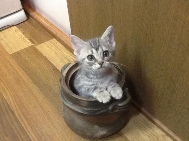 意外と知らない!?猫が好きそうだけど与えちゃダメな食べもの