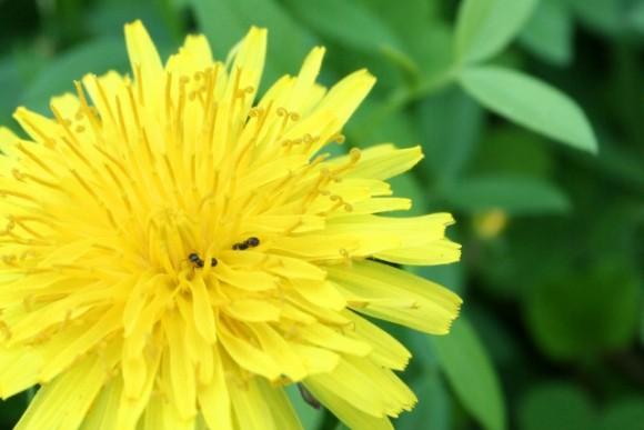 家の中に入ってくる蟻を駆除する安全な方法とは?予防は?
