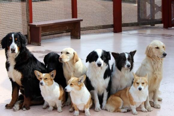 犬の熱中症の症状は?その対処法と予防策は?