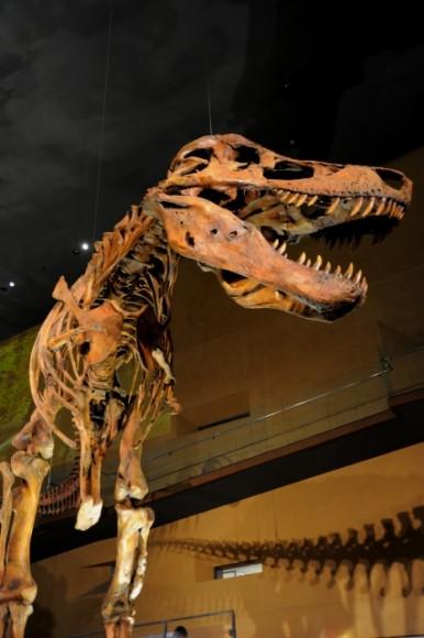 メガ恐竜展2015の混雑状況は?ベビーカーは使用できる?